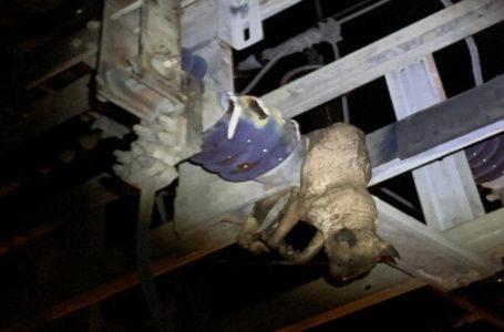 Gato causou apagão que deixou milhares de unidades consumidoras sem luz em Paulo Afonso